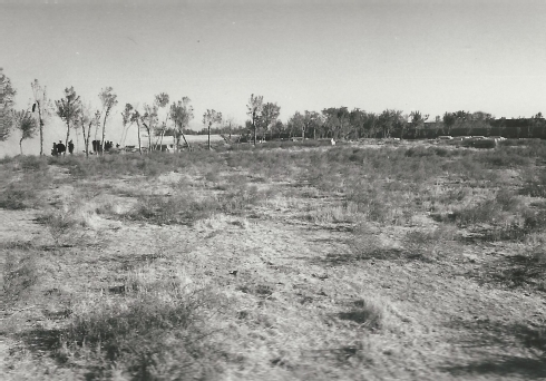 Fig.9 The oldest part of the Herat Jewish cemetery with the younger graves (in the background on the right) and the approx. 250 to 300 year old graves behind the row of trees (center of the picture); the administrator's house (on the left)- Courtesy of Werner Herberg, 1973
